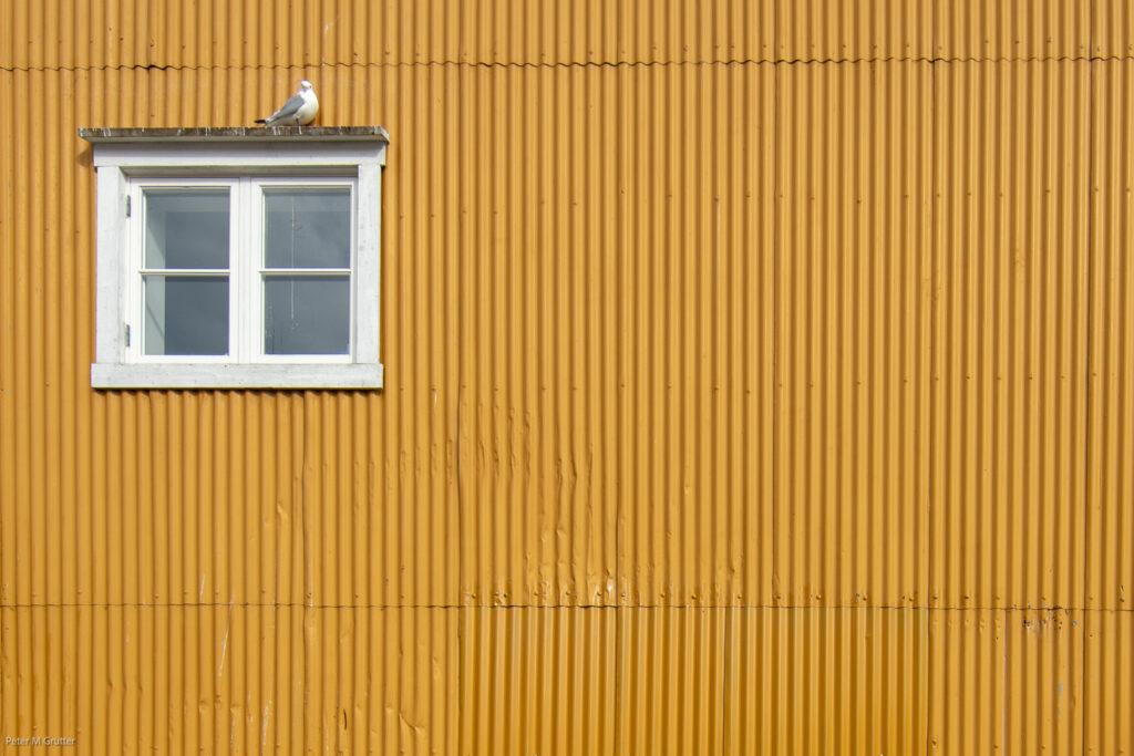 Lofoten-16.jpg